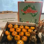Australian Persimmons to Thailand under new protocol